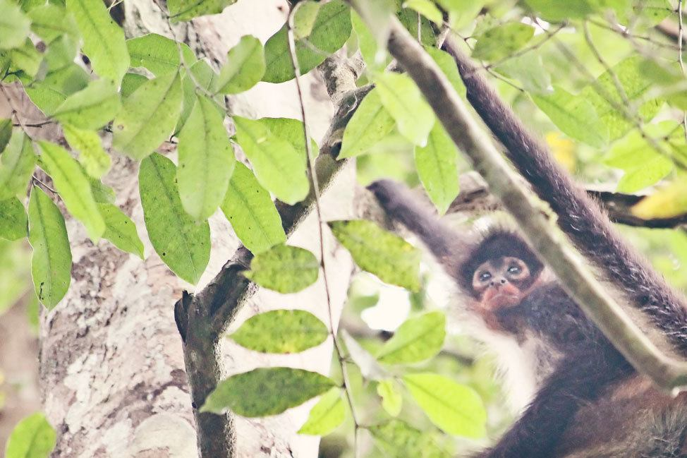 Wildlife at Tikal