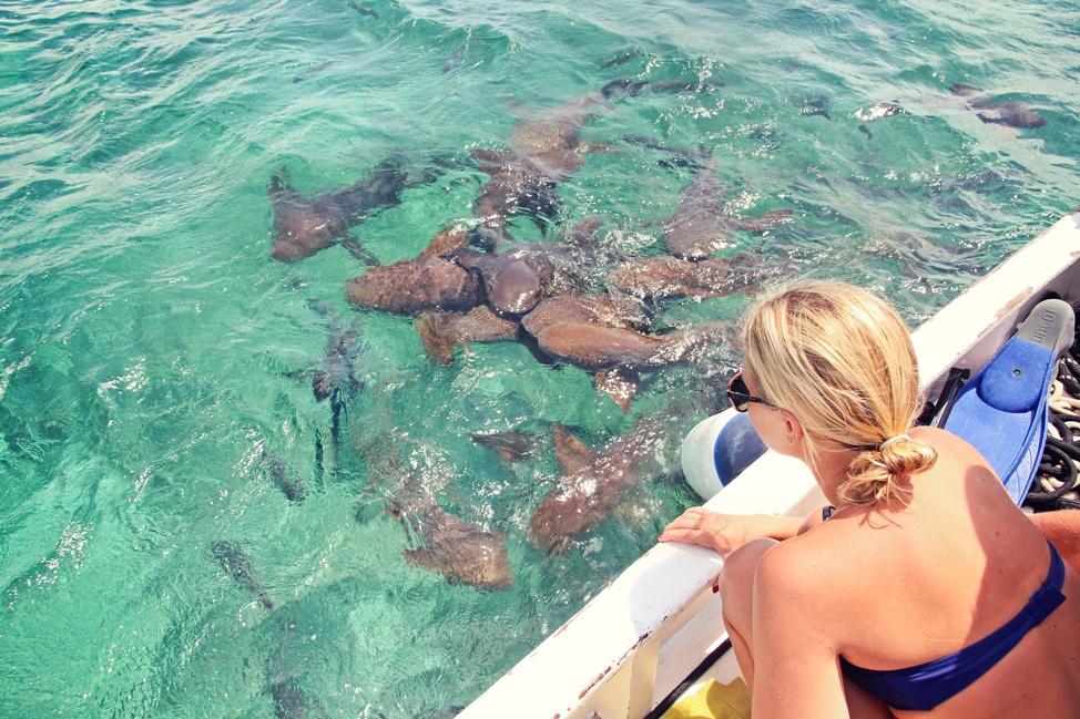 Hol Chan Marine Reserve Snorkeling