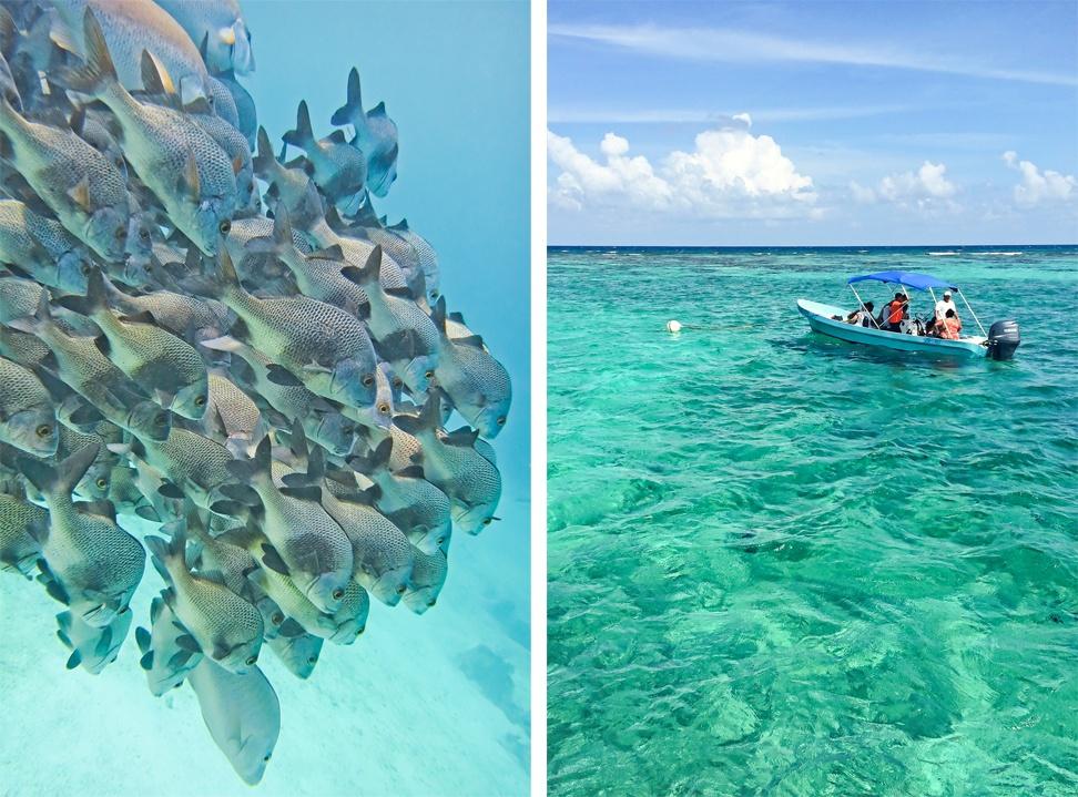 Caye Caulker Snorkeling Trip