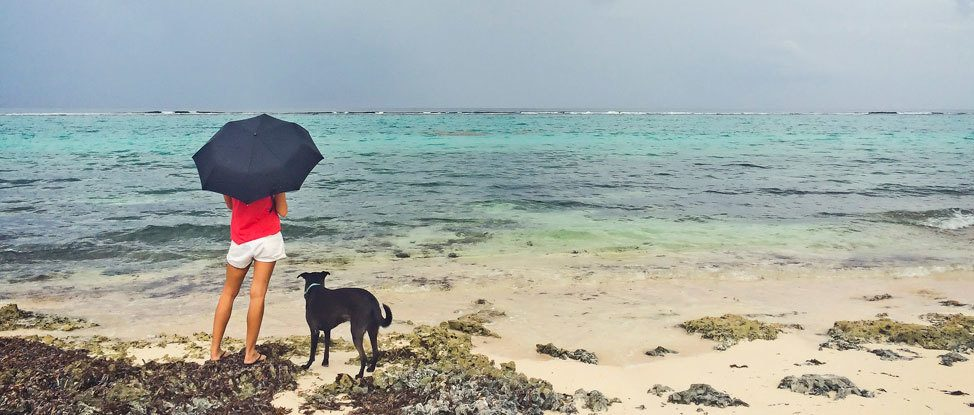 When it Rains, It Pours: Going Back to the Beginning in Grand Cayman thumbnail