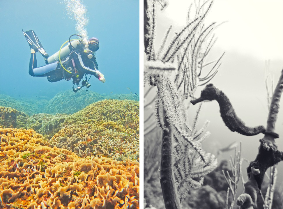 Diving with Barefoot Cay Roatan