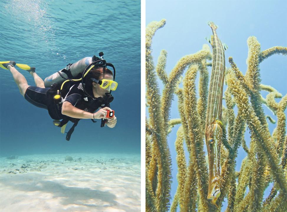 Diving in Bonaire