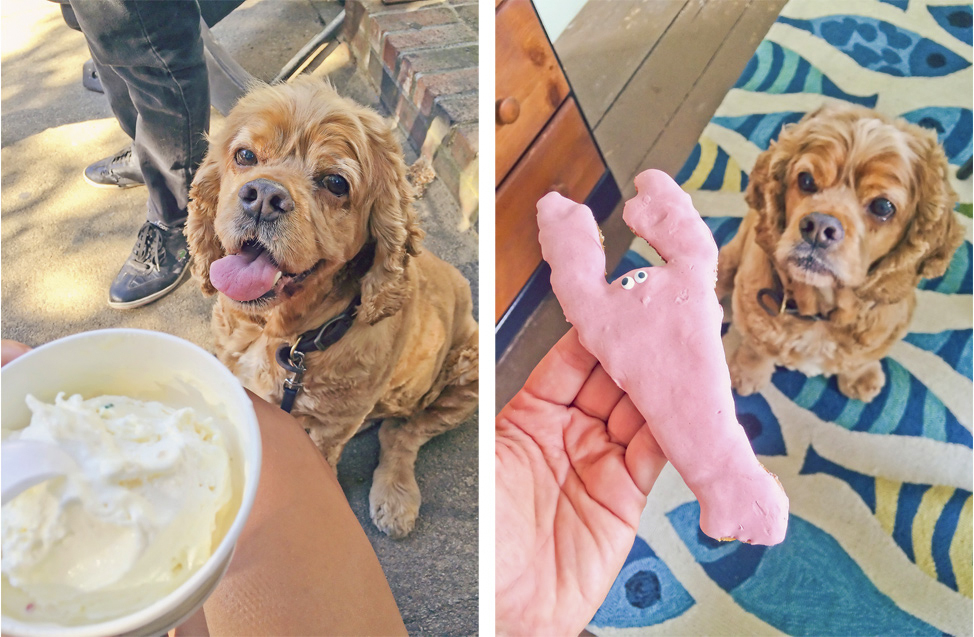 Dogs on Martha's Vineyard