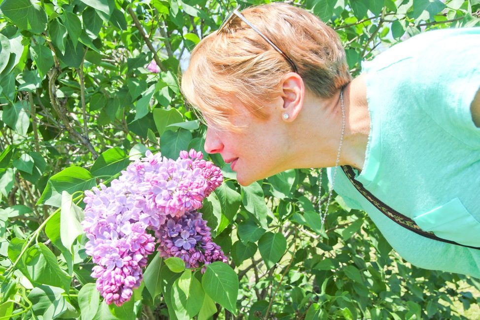 Lilacs in Rochester