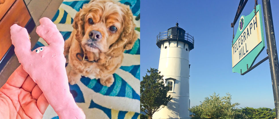 Tucker's Tails: Martha's Vineyard Part Two thumbnail
