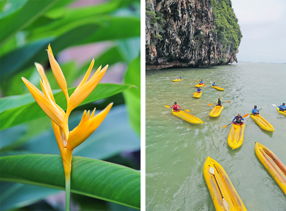 Viator Phang Nga Bay