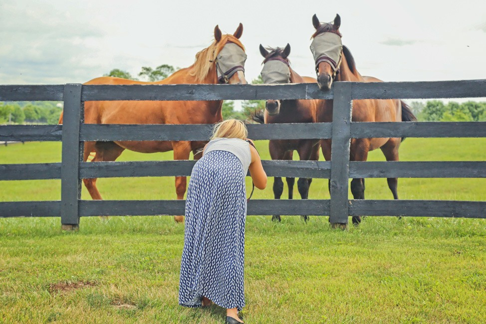 Photographing Horses in Kentucky