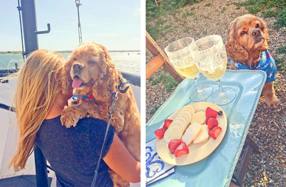 Dogs in Martha's Vineyard