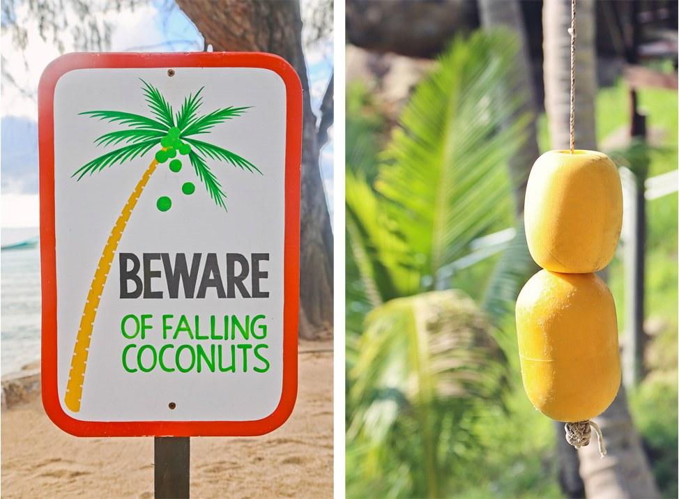 Beware of Falling Coconuts Sign