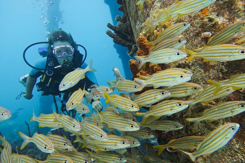Salt Pier Dive Site