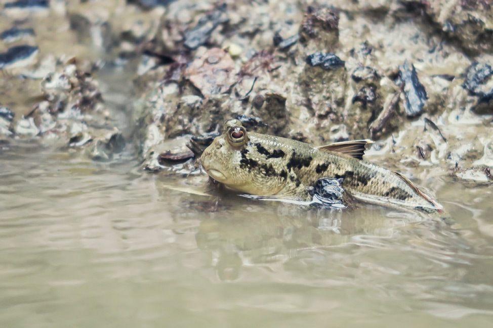 Wildlife in Phang Nga Bay