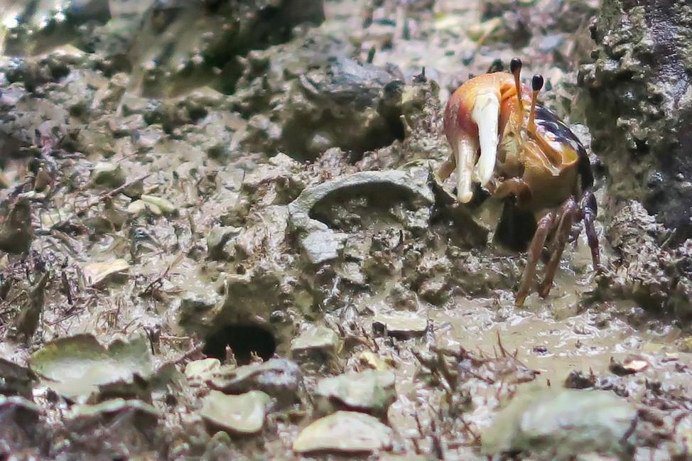 Crabs in Phang Nga Bay