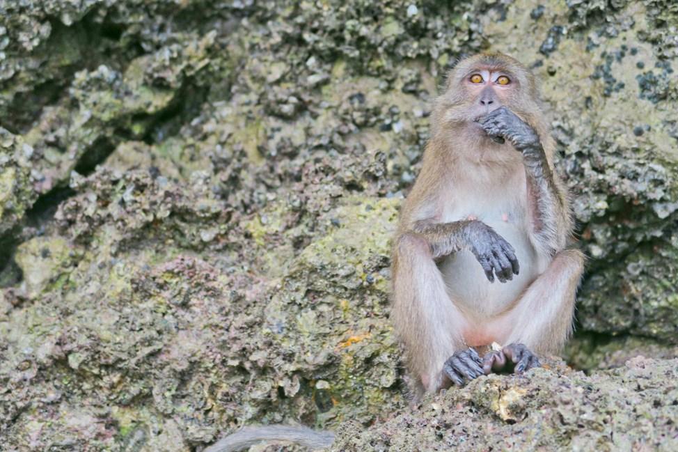 Monkeys in Phang Nga Bay