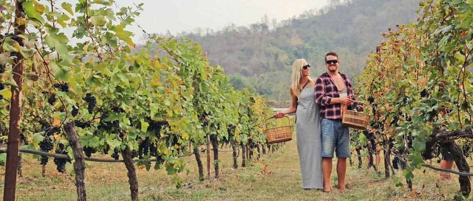 Khao Yai Thailand Wine Region