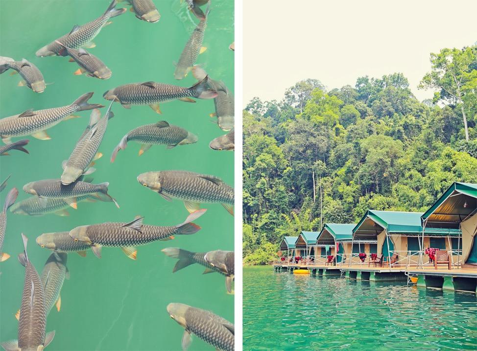 Rainforest Camp Khao Sok