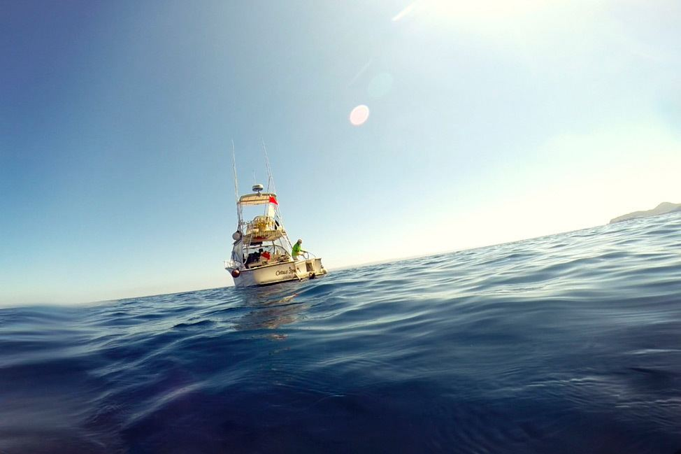 Diving San Diego