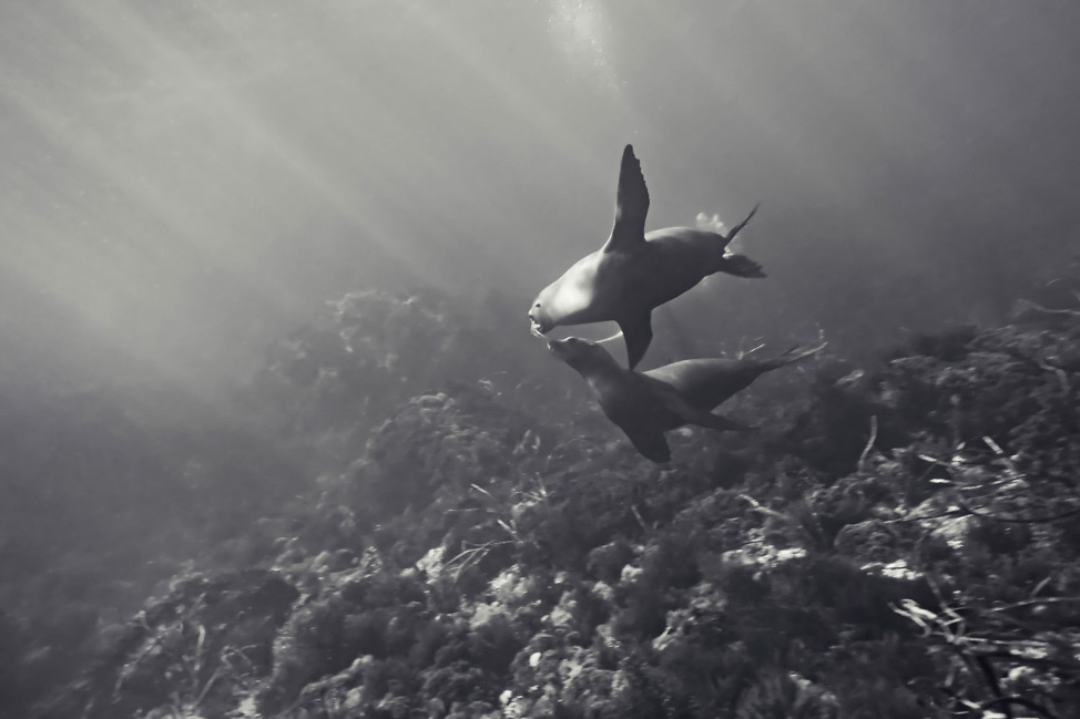 Diving with Sea Lions from San Diego