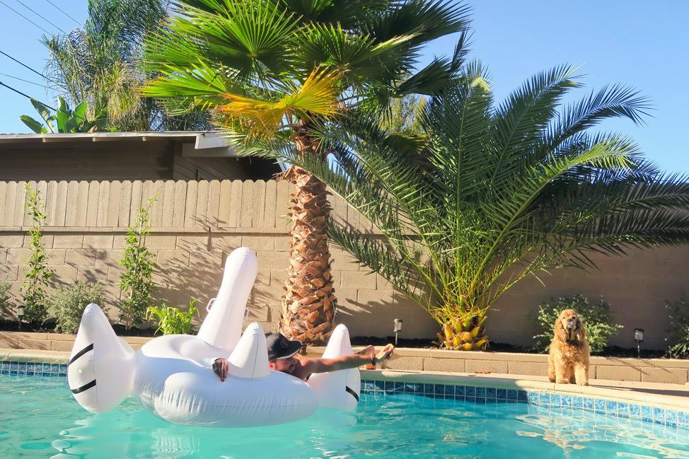 Swan Pool Float