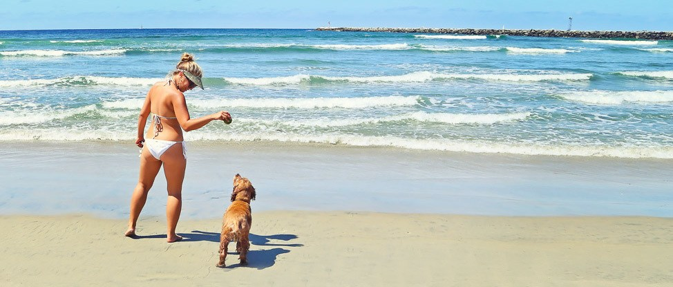 San Diego is For the Dogs: A Pet Friendly Travel Guide thumbnail