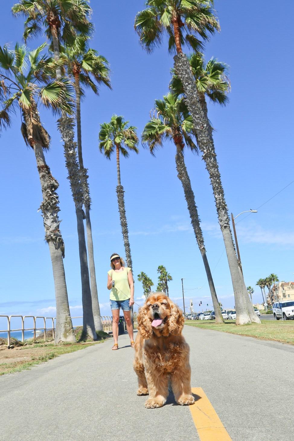 Huntington Dog Beach California