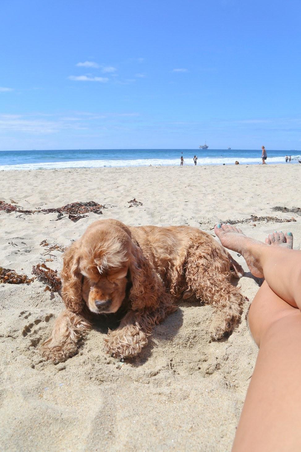 Dog Friendly Road Trip California