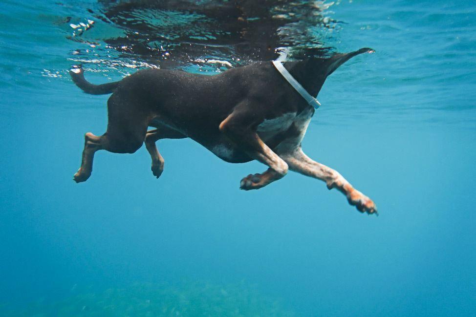 Jump Into Jaws Snorkeling Koh Tao
