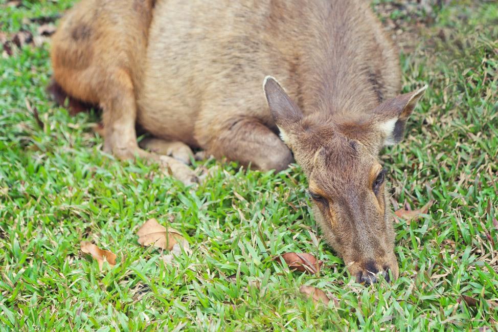Animals at Khao Yai National Park