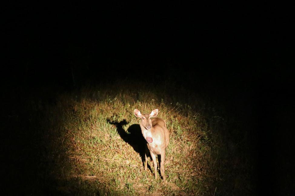 Khao Yai National Park Night Safari