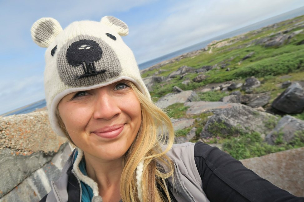 Summer Polar Bear Churchill Manitoba