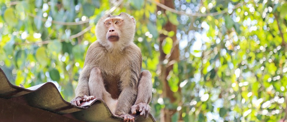 The Complete Guide to Visiting Koh Yai National Park Independently thumbnail