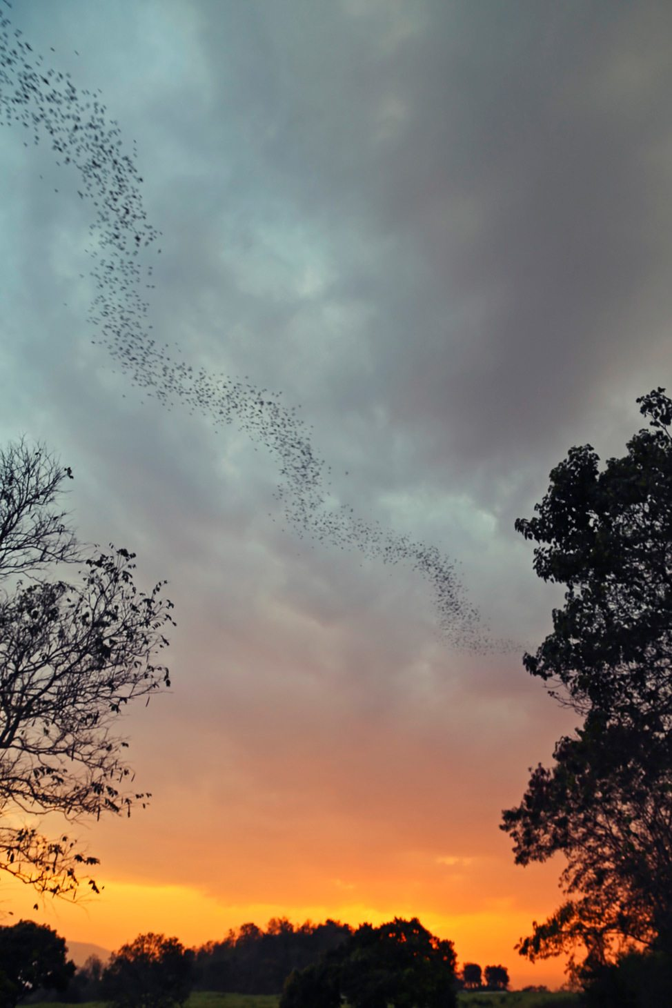 The Beauty of Two Million Bats: Touring Pak Chong • Alex ...