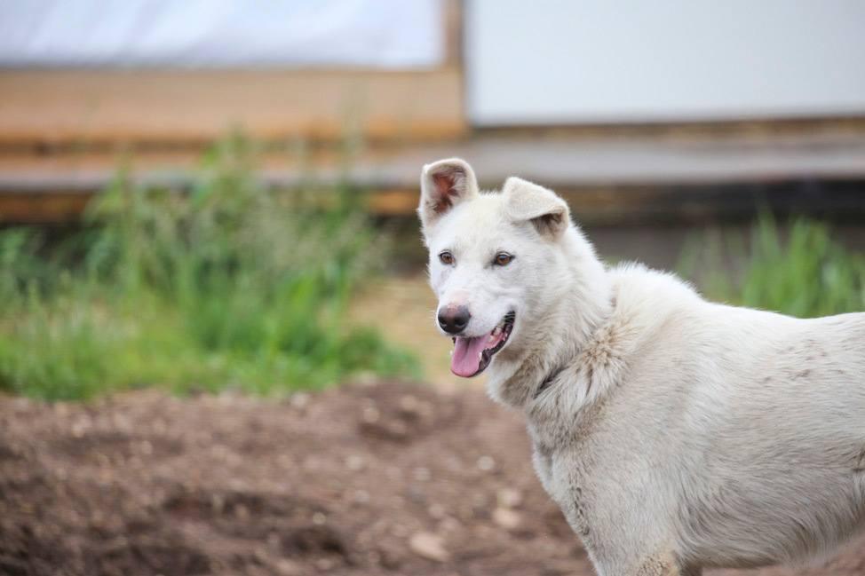 Dogsledding in Churchill Manitoba