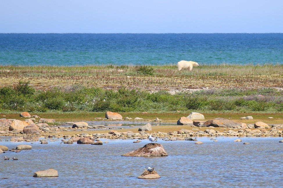 Summer Tundra Buggy Tour in Churchill Manitoba