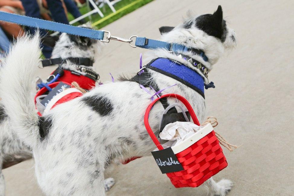 Howl'oween Dog Parade Long Beach Los Angeles 2016