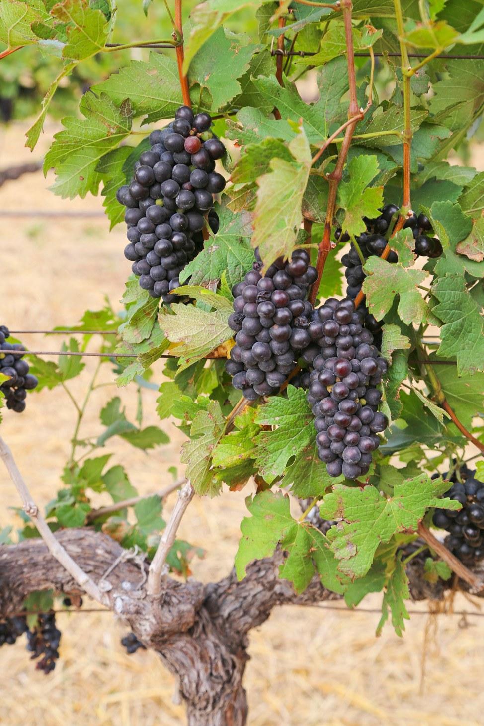 Granmonte Winery Khao Yai