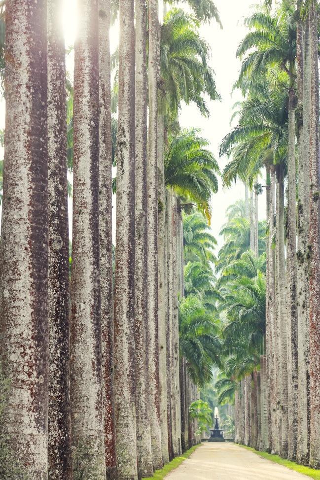 Rio de Janiero Botanical Garden