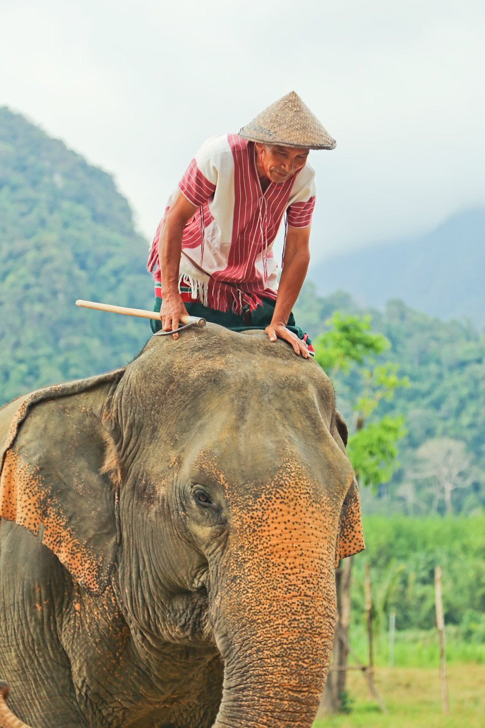 Elephant Camp at Elephant Hills, Khao Sok, Thailand