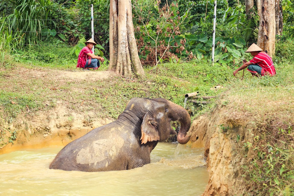 Ethical Elephant Encounter at Elephant Hills, Khao Sok, Thailand