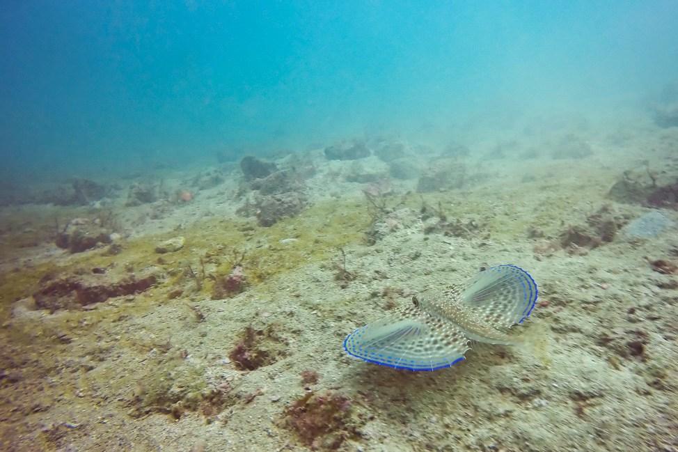 Diving in Arraial do Cabo, Brazil