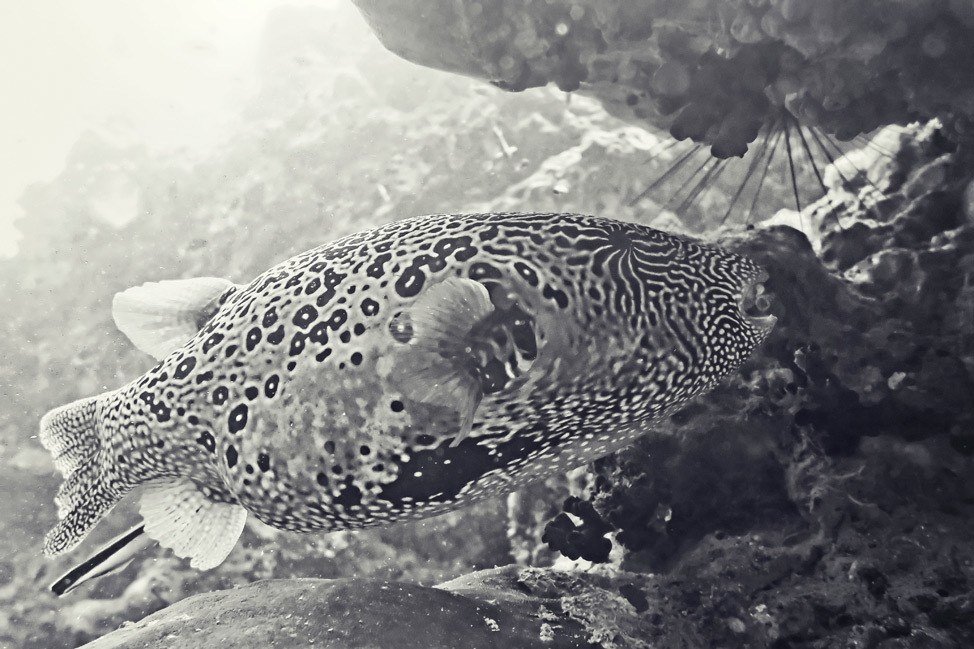 Diving on Koh Tao, Thailand