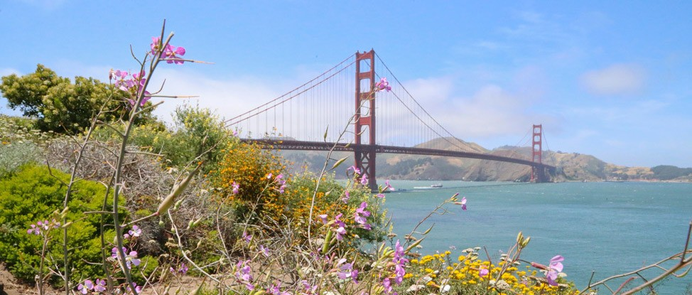 Summer in San Francisco thumbnail