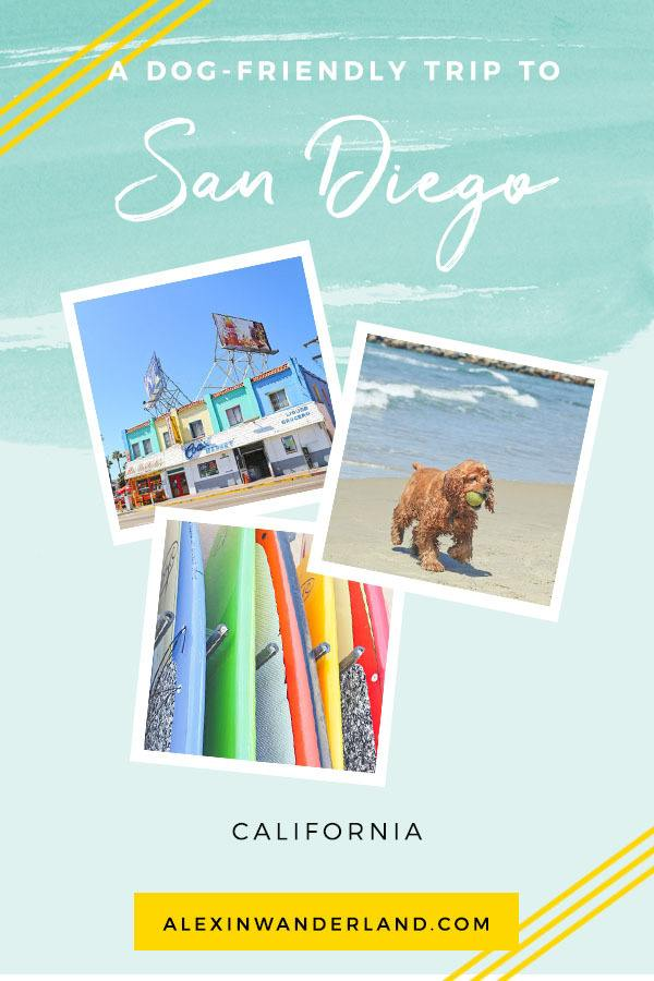A dog-friendly guide to San Diego, California | san diego pet friendly, san diego ca, san diego travel