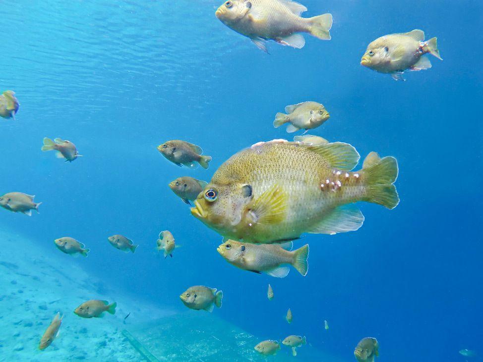 Scuba Diving Blue Grotto, Williston, Florida