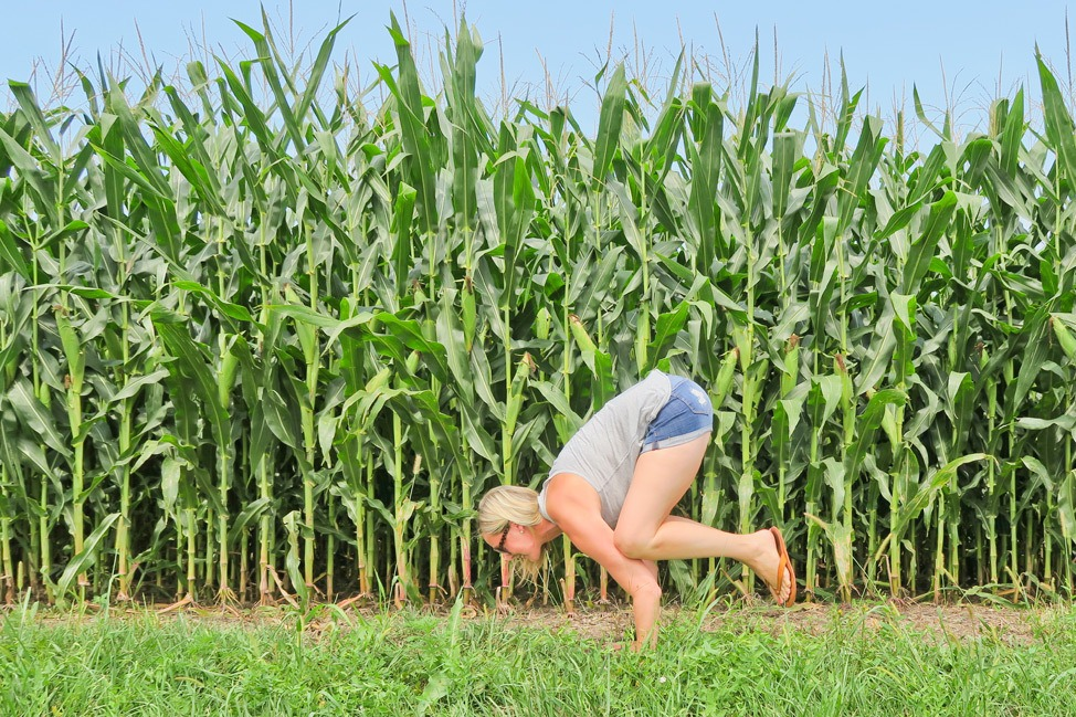 Cornfields in Decatur