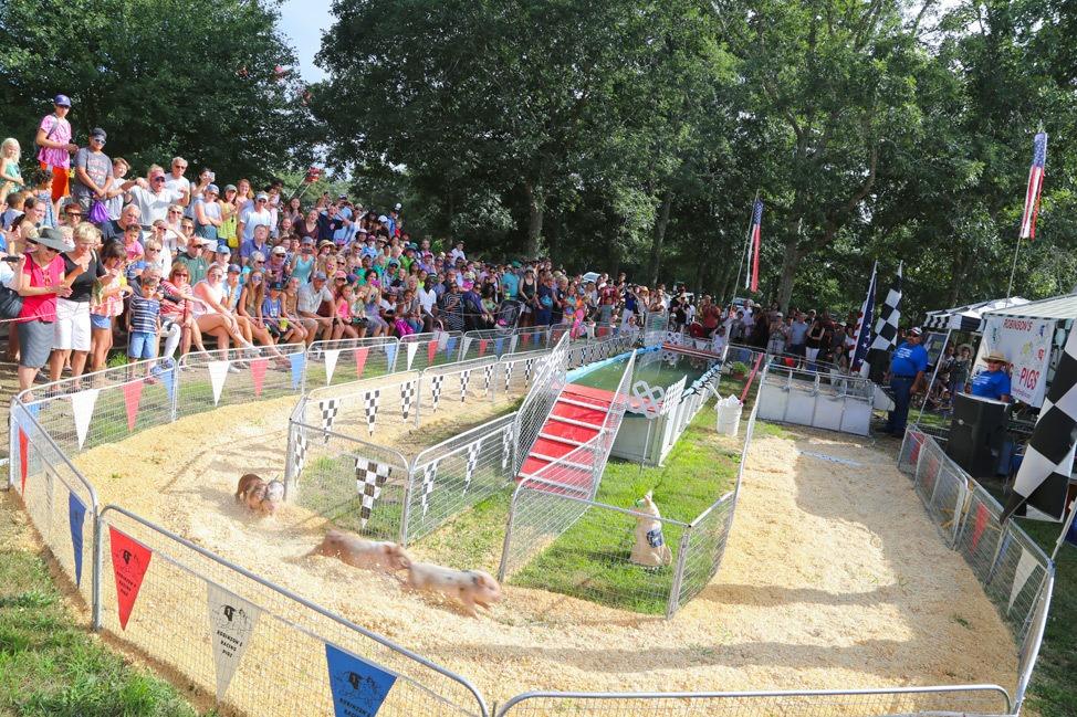 Pig Races at The Martha's Vineyard Agricultural Society Ag Fair
