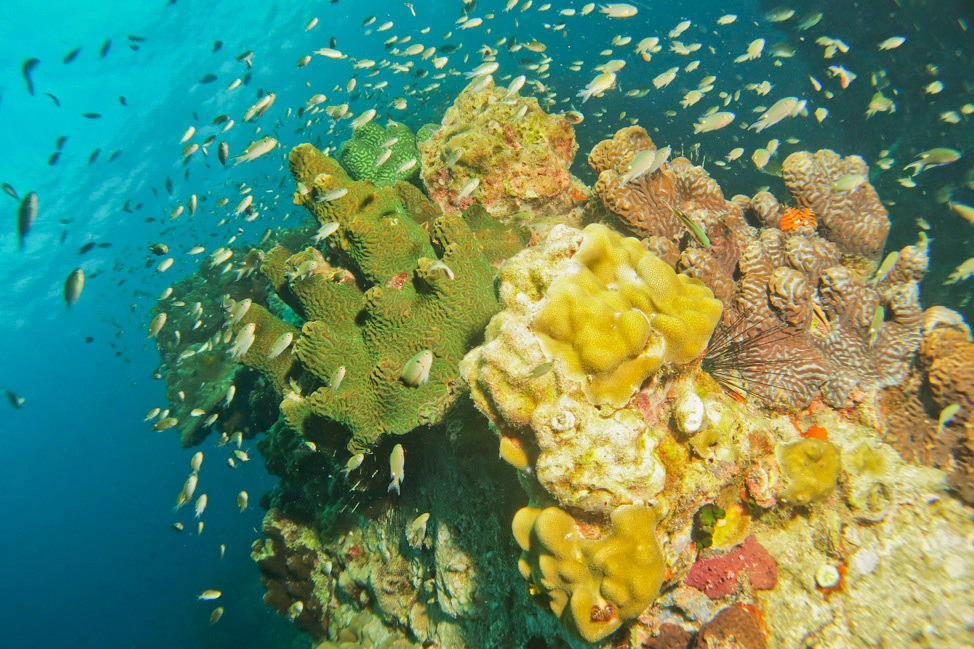 Wide Angle Underwater Photography Course