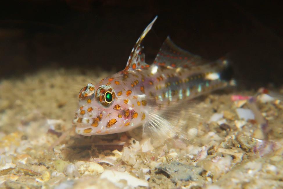 Macro Underwater Photography Course