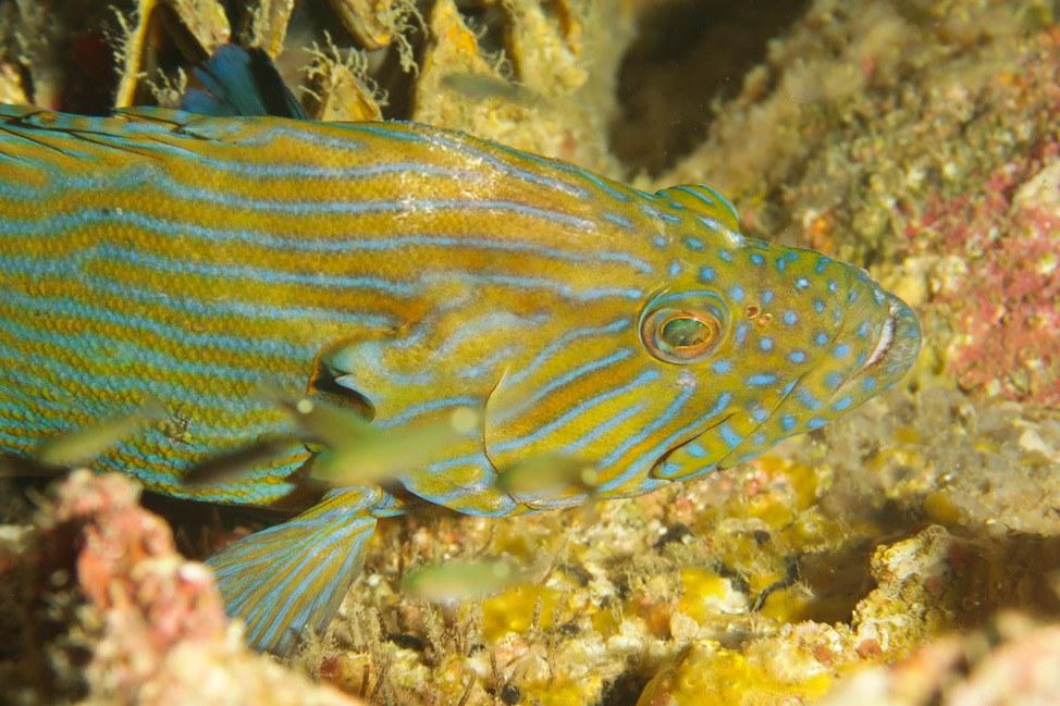 PADI Digital Underwater Photographer Course Review