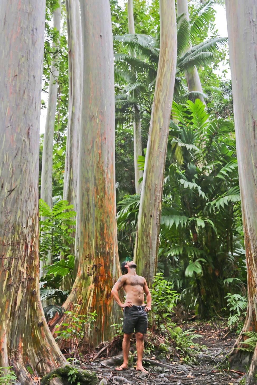 Ke'anae Arboretum, Road to Hana, Maui