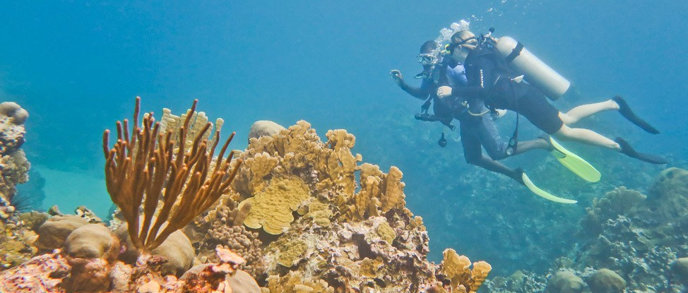 Is Diving in Jamaica Worth It? thumbnail